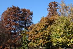 AUTUMN IN MILAN - FOLIAGE IN PARCO SEMPIONE (mauro gambini) Tags: milano milan parcosempione foliage autunno autumn