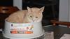 My cat knows how to read. (ricmcarthur) Tags: crash spa heatedbowl ricmcarthur rickmcarthur rondeauric