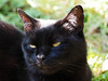 Jesienne Impresje (arjuna_zbycho) Tags: herbst jesień autumn autunno jesen kwiaty blimen flower felix blackcat tuxedo tuxedocat kater hauskatze cat animal cute animals pets gato kitten feline kitty kittens pet tier haustier katzen gattini gatto chat cats kocio
