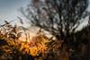 November light (mariusbucsa) Tags: rio paseo jalón calatayud huermeda aragón es españa nikkor35mm18g nikond5600 nikon nikkor contraluz luz naturaleza nature otoño autumn november river walk