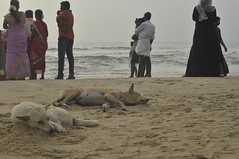 Moment's peace (brendieiniceland) Tags: kerala varkala beach trivandrum india southindia sea blue sand street