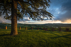 shade tree sunset (36 of 1) (sassiitalytours) Tags: wine piemonte castle italy italia winecountry vino