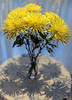 Tall Flowers in a Tiny Vase with Shadows. (WilliamND4) Tags: flowers vase yellow shadow nikon d810 50mm