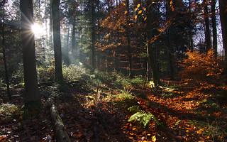 Good morning, Black Forest