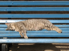 The cat that sleeps alone - San Blas- Cuzco (Lewitus) Tags: sanblas cuzco 2007 cat sleepperu