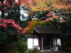 Gate under autumn leaves (yukky89_yamashita) Tags: 大津 滋賀 gate autumn leaves 神変大菩薩 三井寺 temple japan