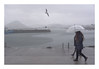Paseo bajo lluvia y gaviota (juan jose aparicio) Tags: lluvia rain muelle dock paraguas mar seascape faro lighthouse color umbrella