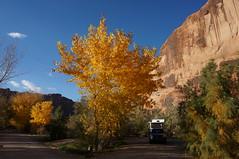 fall camping 2 (rovingmagpie) Tags: utah moab gooseislandcampground coloradoriver gooseisland cottonwoods fallcolor aliner aframecamper yellow nbc fb2017