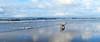Beach Egmond aan Zee (Meino NL OFF LINE) Tags: beach strand noordzee northsea beachegmondaanzee egmondaanzee sea