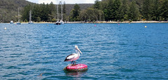 2017-11-27_09-10-35 Coasters Retreat. (Boat bloke) Tags: sydney australia pelican bird water blue buoy buoyant coast waterfront pittwater mooring boats boat sand beach samsung galaxy s4
