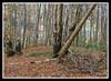 Viking Burial Mound (veggiesosage) Tags: derbyshire southderbyshire walk reptoncirclewalk fujifilm fujifilmx20 x20 heathwood vikingburialground