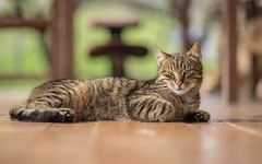 kittens (52) (Vlado Ferenčić) Tags: animalplanet animals vladoferencic catsdogs cats vladimirferencic kitty kittens zagorje hrvatska hrvatskozagorje croatia klenovnik nikond600 nikkor8518
