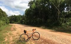 Myanmar, Ayeyarwady Region, Myaungmya District, Myaungmya Township, Poe Laung Village Tract (Die Welt, wie ich sie vorfand) Tags: myanmar burma irrawaddy delta ayeyarwadyregion ayeyarwady myaungmyadistrict myaungmya myaungmyatownship poelaung bicycle cycling surly crosscheck