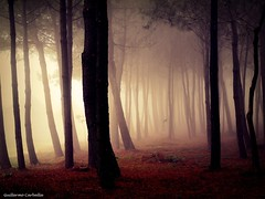 Where the meigas live (Guillermo Carballa) Tags: forest woods trees pines fog mist morning light carballa em5 olympus colors