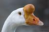 (JOAO DE BARROS) Tags: joão barros bird portrait