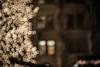 Munich Town Hall and Christmas Tree - Photo # 15 of a Christmas Series (*Capture the Moment*) Tags: 2017 backlight backlit blätter bokeh christmasmarket dof fotowalk gegenlicht leaf leafes mog mogtrioplan28100neo meyergörlitztrioplan10028 meyeroptikgörlitztrioplan10028 munich münchen nachtaufnahmen nightshot pflanzen sonya7m2 sonya7mii sonya7mark2 sonya7ii sonyilce7m2 weihnachtsmarkt bokehlicious