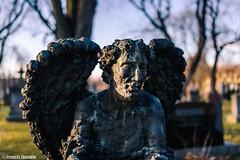 L'ange (Les vues éclectiques) Tags: sculpture cimetiere sigma35mmf14