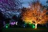 Enchanted Saltram (PAUL YORKE-DUNNE) Tags: saltramhouse enchanted lights evening nt