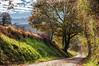 Otoño (ccc.39) Tags: asturias latores llagú otoño camino nubes hojas
