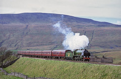 828 Steams Away From Ribblehead Viaduct. 07/05/1994 (briandean2) Tags: 828 ribblehead settlecarlislerailway steam railways uksteam ukrailways