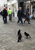 Can we afford a pastie yet Fred, I'm getting peckish! (catrionatv) Tags: paving winchester highstreet cash money pastie birds crows