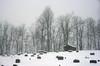 Presiding (oldoinyo) Tags: northcarolina snow snowstorm autumn unexpected trees ultraviolet uv uva