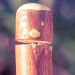 My walking stick has a secret thumbnail