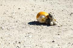Traveller's break (LynxDaemon) Tags: sand orange incongruous tiger puppet desolate lonely travel