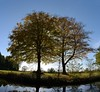 Golden backlight (simon edge) Tags: trees nikon sigma 1750mm chestefieldcanal stitched stitchedpanorama msice backlight water reflection sky landscape