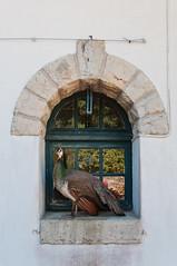 ARNAGA JARDIN-010 (MMARCZYK) Tags: villa arnaga france pays basque jardin ogrod 64 pyrénéesatlantiques nouvelleaquitaine cambolesbains à la française