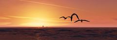 Freedom (Stachmo) Tags: watch dogs 2 freedom birds seagull san francisco ocean beach sunset