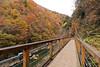 通往楓紅森林裡 IMG_6085 (Cookie Chang X 小餅) Tags: 日本 秋田 角館 抱返溪谷 溪谷 峽谷 河 河流 水 山 山脈 楓葉 紅葉 楓紅 風景 景色 自然 樹 森林 canon 6d eos japan akita tohoku