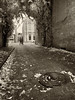 Alley View (Ian Sane) Tags: ian sane images alleyview sepia tones autumn fall leaves candid street photography downtown salem oregon alley storm drain manhole cover apple iphone 8 plus smartphone cell phone iphoneography phoneography