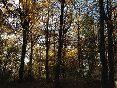 06 (emmess2) Tags: campiglia cinqueterre spezia autumn fall leaves