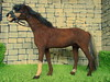 DSCN1614 (kreata_musateka) Tags: dollhouse handycraft handmade 16 horse