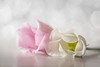 romantic touch (Emma Varley) Tags: flowers cut lisianthus soft romantic white pink reflections stilllife bokeh dreamy fvf sundaylights