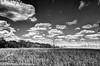 Sawgrass Meadow (BobHartmannPhotography) Tags: bobhartmannphotography hartmann landscape 1365 c2017bobhartmann wwwbobhartmanncom everglades bobhartmanncom bobhartmann 365 looproad ochopee florida unitedstates
