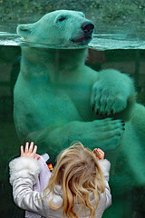 Curiosity and admiration (K.Verhulst) Tags: polarbears polarbear beren bears bear ijsberen ijsbeer ouwehandsdierenpark rhenen