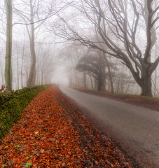 Road to Nowhere (jactoll) Tags: broadway worcestershire cotswolds lane fog foggy mist misty landscape moody trees sony a7ii sony2470mmf28gm jactoll