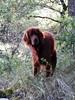 101_6424 (Cassiopée2010) Tags: chien setterirlandais