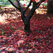 """Westonbirt Arboretum • <a style=""""font-size:0.8em;"""" href=""""http://www.flickr.com/photos/84132664@N06/26389848239/"""" target=""""_blank"""">View on Flickr</a>"""