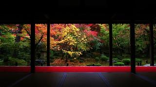 Gradation / Garden of ten Bulls -Kyoto Enkou-ji  京都 圓光寺 �牛�庭