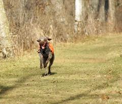 DSC00424 (baylersmith) Tags: minnesota state park nature statepark hunting dog fall