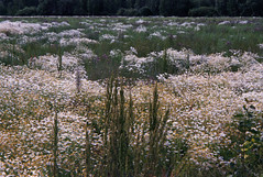 untitled (amanda aura) Tags: film helsinki finland konicazup130e flowers plants cityscape