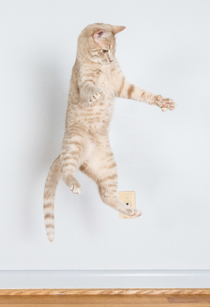 Jumping Bean Cat Toy