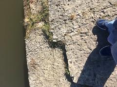 where i stood. sag quarry. november 2017 (timp37) Tags: where stood sag quarry illinois november 2017