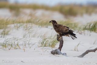 Eagle One  3I6591