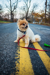 Off the Leash (Evan's Life Through The Lens) Tags: camera sony a7rii sonya7rii lens glass canon fd 28mm f28 vintage outdoors dog street