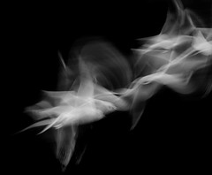 SEAGULL STUDY 104 (annemcgr) Tags: seagulls gulls birds flight motion icm blackwhite monochrome fineartphotography