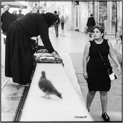Black Friday_Hasselblad (ksadjina) Tags: 6x6 carlzeisssonnar150mmf14 coimbra fujiacros100 hasselblad500cm nikonsupercoolscan9000ed october2017 portugal rodinal analog blackwhite film scan street